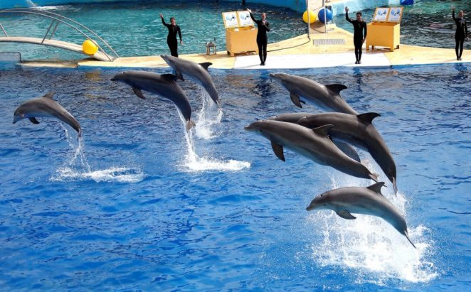France to ban use of wild animals in circuses, marine parks | PBS NewsHour