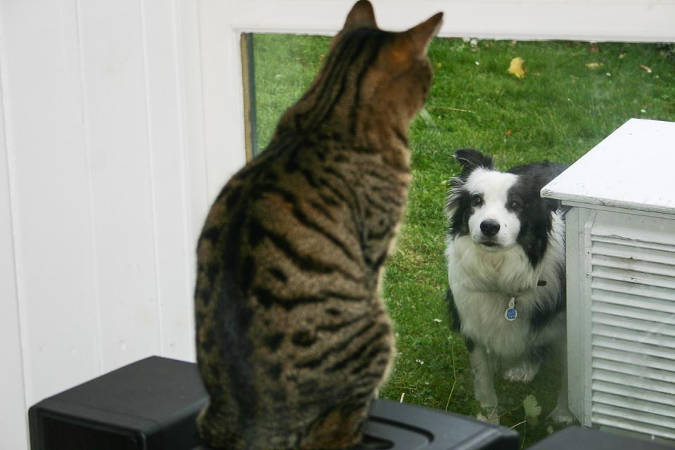 Lulu and Griff (backblip)