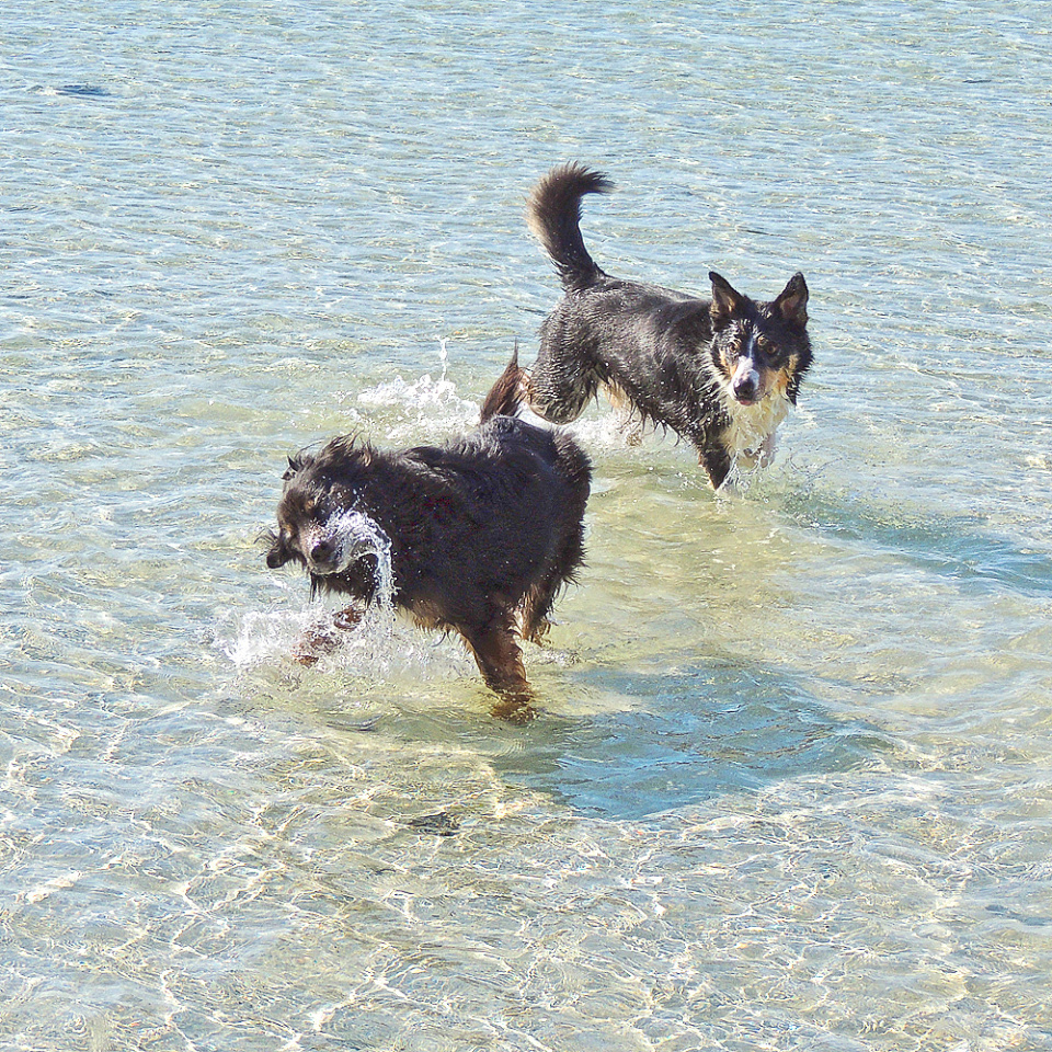 Suzie and Nell in the sea