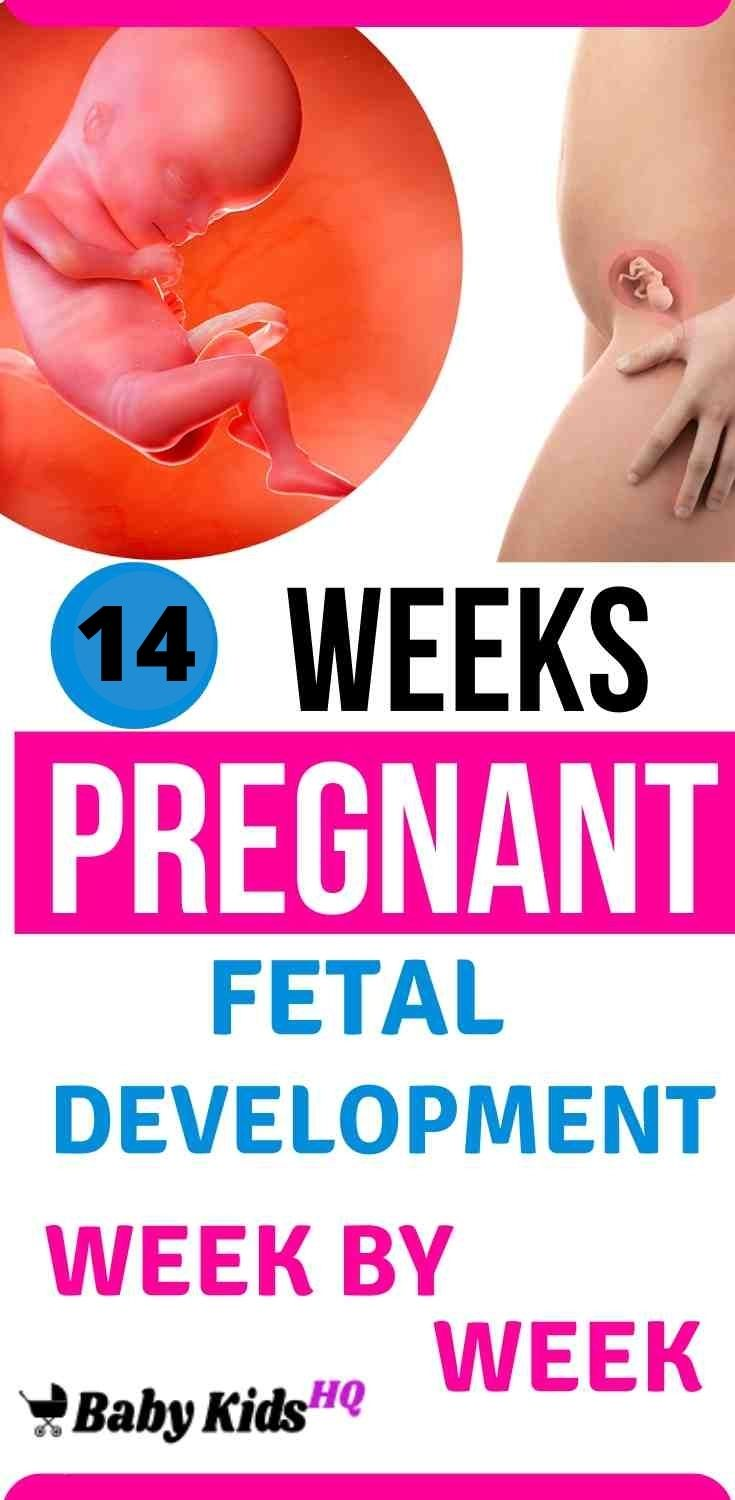 Baby Development In Womb: 14 Weeks Pregnant 2