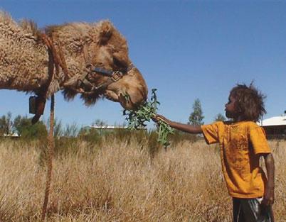 gibson desert camel