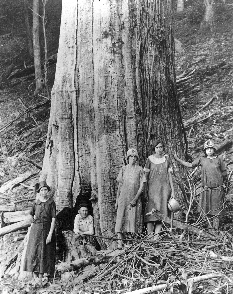 The Family of James and Caroline Shelton pose by a large dead Chestnut Tree in the Great Smoky Mountains National Park circa 1920.