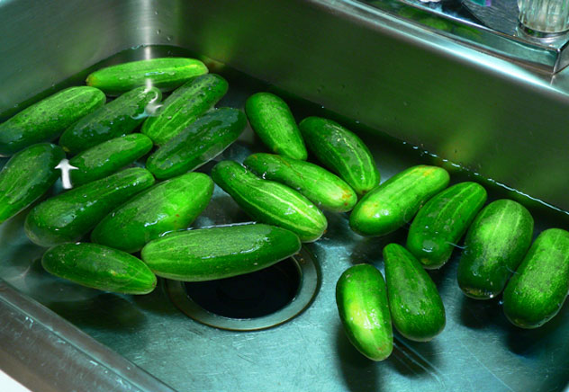 Place the cucumbers in a sink filled with cold water.  Gently rub each cucumber by hand to remove any dirt or other particles.  Do not use a vegetable brush to scrub the cucumbers. Drain off the dirty water when finished.