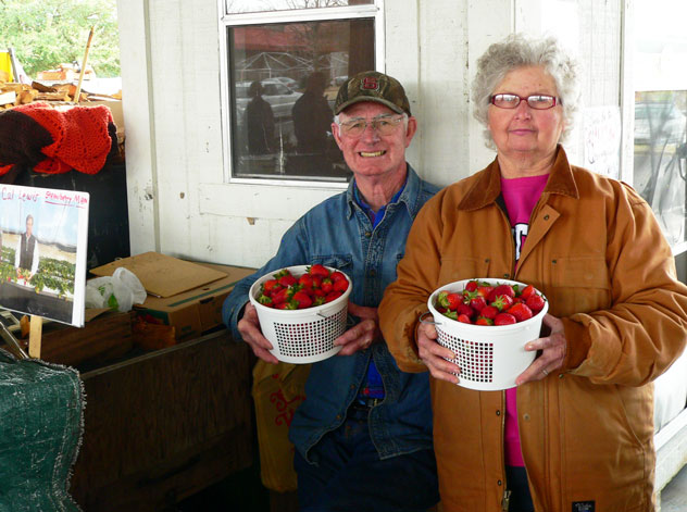 """Here, Helen and William Wise, proudly display buckets of fresh ripe strawberries available at their booth. Helen told me they had been selling strawberries at market since October of last year from the """"tunnel"""" type greenhouses they're grown in. I was eager to turn one of these buckets of berries into some sweet strawberry syrup. Be sure to visit the Wise Farms booth when you shop the farmer's market and online at www.wise-farms.com.  They're just one of many farmers that sell throughout the year at the Raleigh Farmers Market. Ask them to show you the pictures of the family while you're there."""