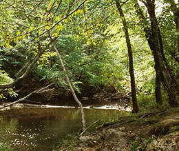 nc-parks-2 National Trails Day Hike hollister