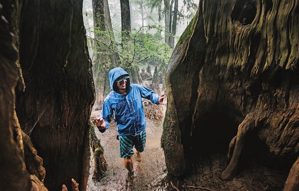 Photo Essay: Giants of The Forest