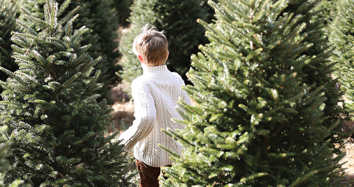 photo essay in pursuit of the perfect pine our state magazine - Christmas Tree Farm Asheville Nc