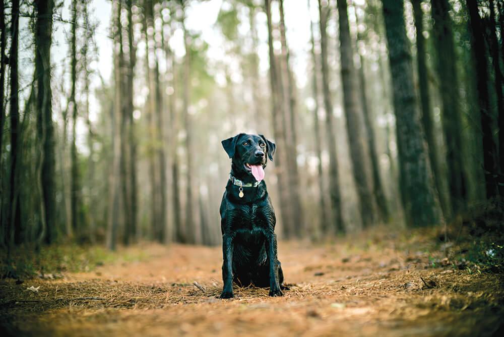 Ramblin' Man: Life Off the Leash With a Canine Companion