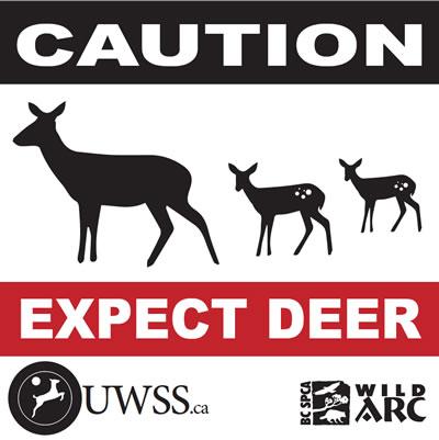 Vehicle-deer collisions