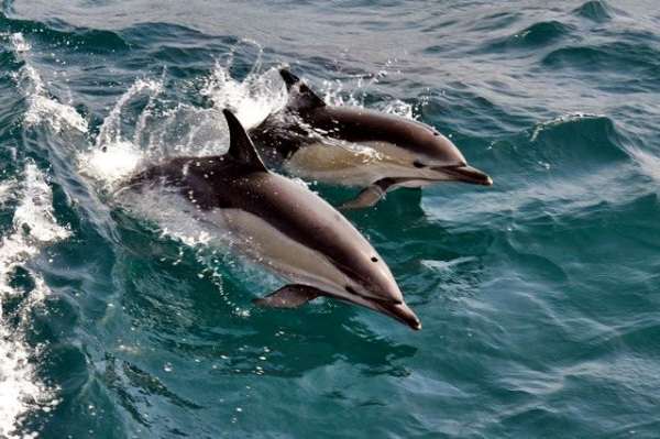 Port Stephens Dolphin Watching Tour