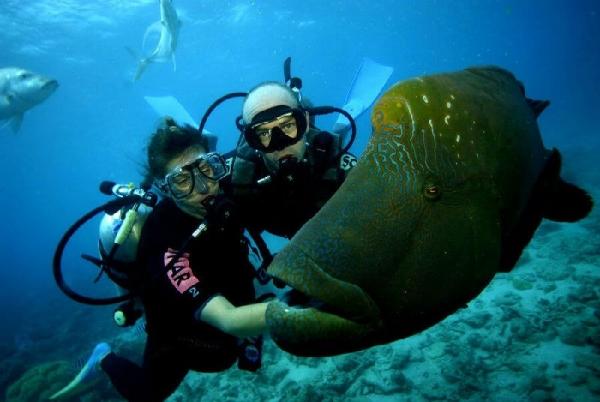 2-Day Great Barrier Reef Cruise & Kuranda Combo Tour