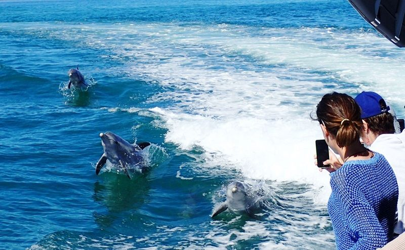 Dolphin, Penguin and Sea Lion Adventure Cruise from Perth
