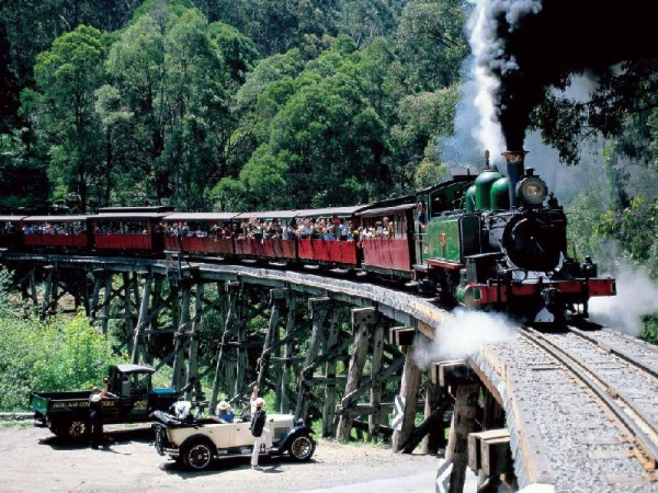 Puffing Billy Steam Train and Penguin Parade Tour