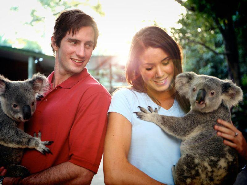 Afternoon Brisbane City Tour with Koala Sanctuary