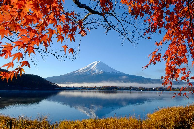 Mt. Fuji Cherry Blossoms Viewing Day Tour
