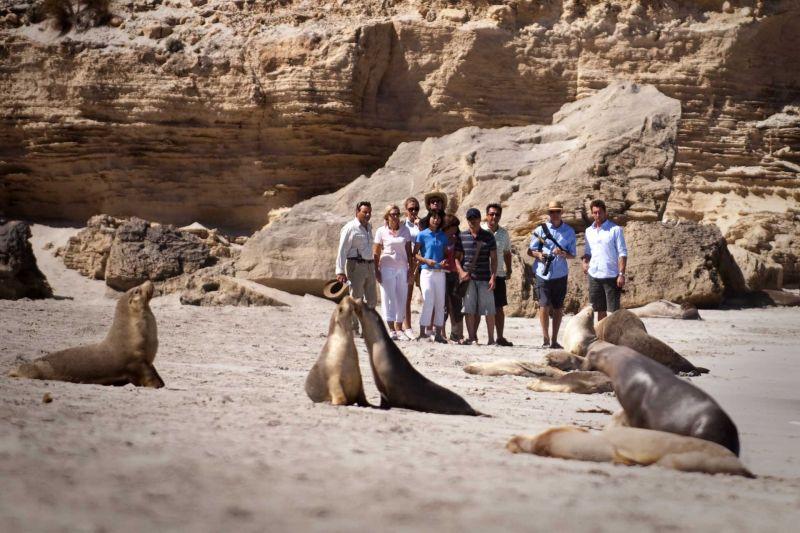 Kangaroo Island Day Tour