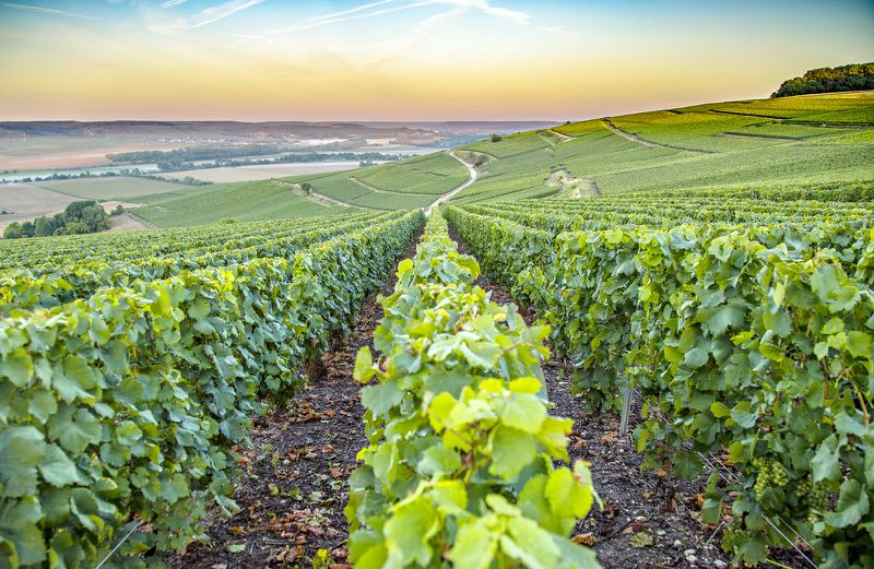 Champagne Vineyards Day Trip from Paris with Reims Cathedral