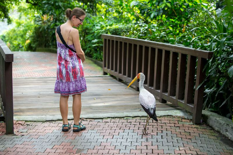 Kuala Lumpur National Zoo & School of Hard Knocks Tour
