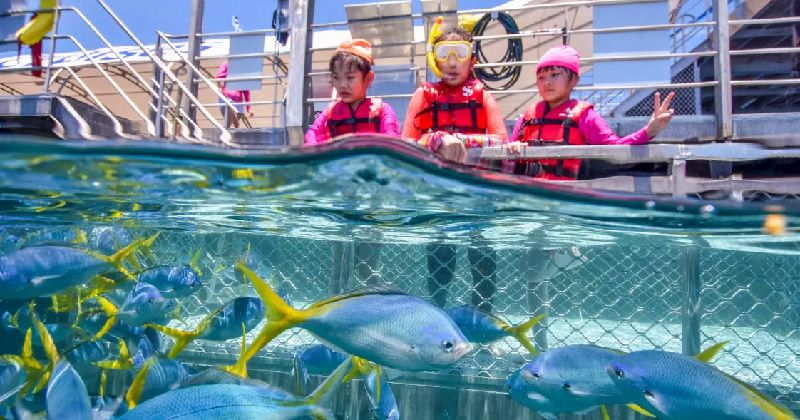 Full Day Great Barrier Reef Cruise with 10-Min Scenic Helicopter Flight by Sunlover