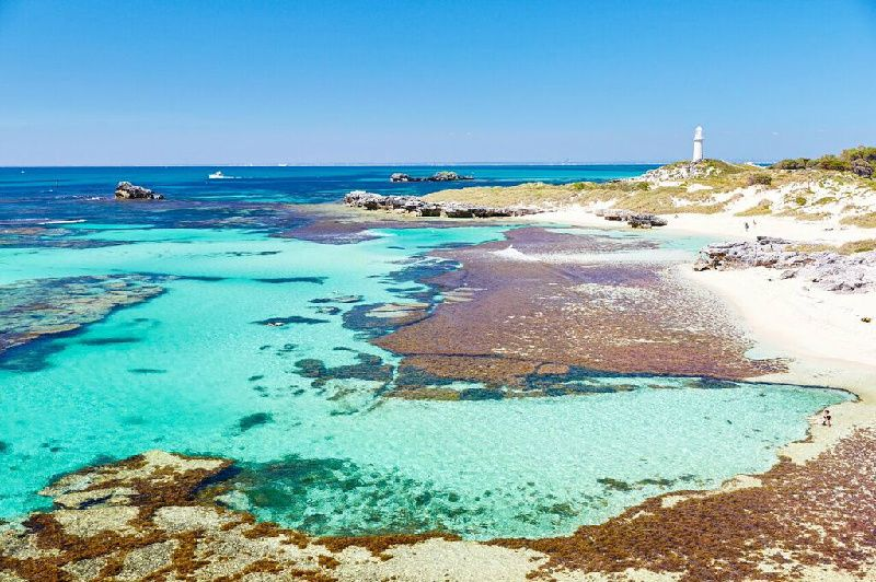 Rottnest Island Bayseeker: Ferry and Bus Tour Package W/Hotel Transfer