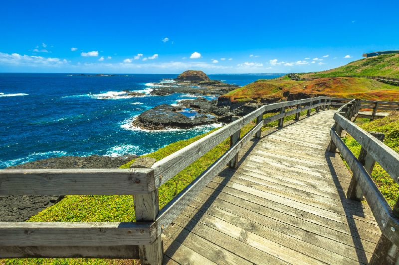 1-Day Phillip Island Tour: Penguin Parade & Koala Highlights