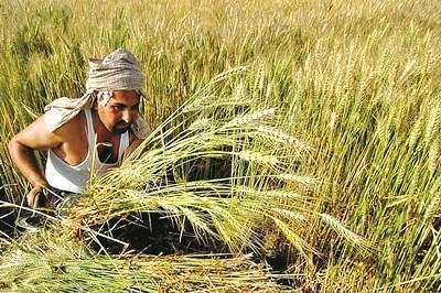 सध्या राजस्थानमध्ये सुरू झालीय ही योजना  - Marathi News |  सध्या राजस्थानमध्ये सुरू झालीय ही योजना  | Latest national Photos at Lokmat.com