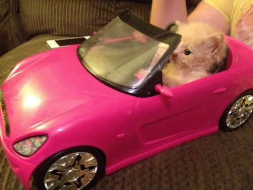 Pink Hamster Convertible Funny Faxo
