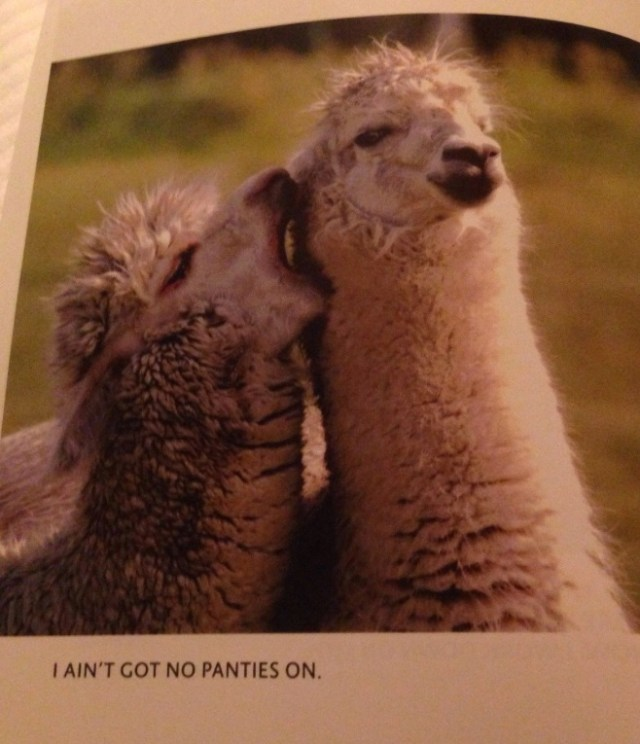Llama Love I Aint Got No Panties On Best Book In The World Funny Faxo