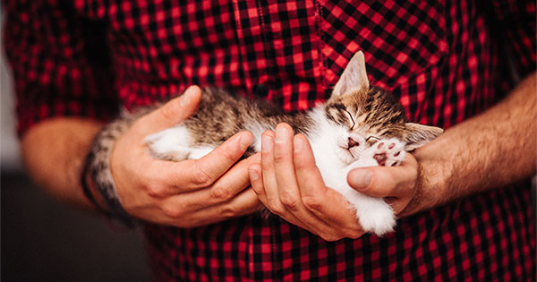 Selling Your Home? Is Your Listing 'Pet-Friendly'? | Keeping Current Matters