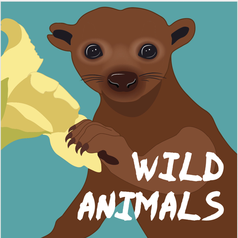 Wild Animals Podcast