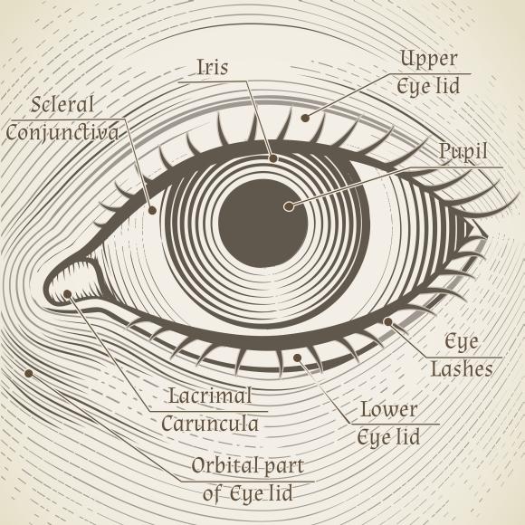 Human Eye Graphics On Creative Market