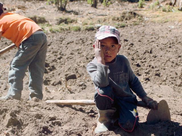 Los hermanos Maicol —derecha— y Yeison López Pérez, de 7 y 8 años, respectivamente, a pesar de estar desnutridos trabajan con azadón en los terrenos secos de la aldea Tuilelén, Comitancillo, San Marcos. (Foto Prensa Libre: Aroldo Marroquín).