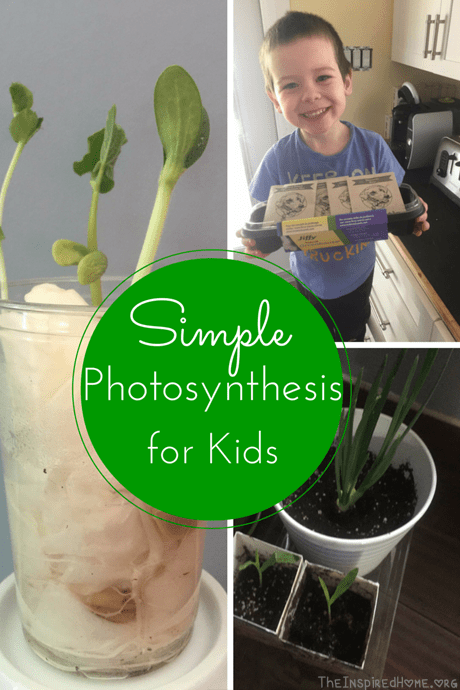 Photosynthesis For Kids The Inspired Home