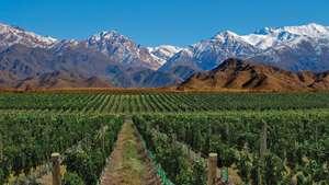 Argentina - Lake District & Casa de Uco, Mendoza