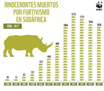 Cuando una mutilación se convierte en la salvación para los rinocerontes
