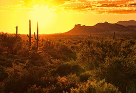 Arizona self drive motorcycle tour - Phoenix