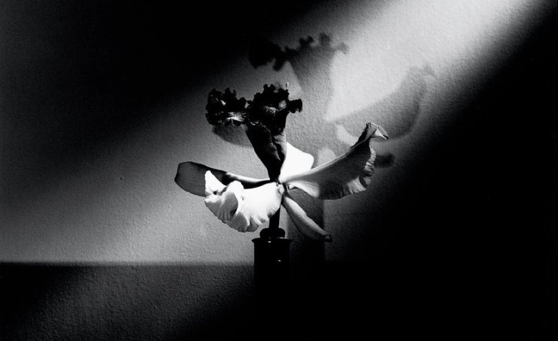 10 Black and White Flowers by Mapplethorpe That Will Seduce You     10 Black and White Flowers by Mapplethorpe That Will Seduce You