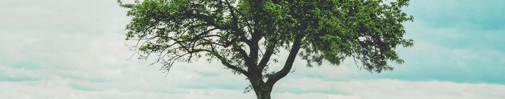 Our Daily Bread Devotional 25th April 2021 - A Tree To Heal