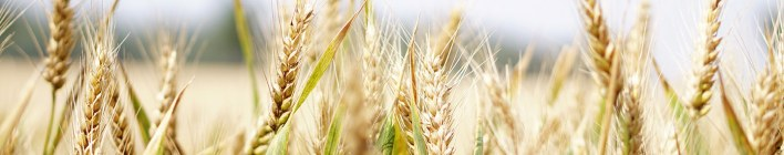 Our Daily Bread 22nd July 2021 Devotional - Seeking God's Help