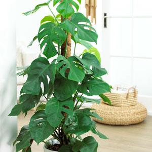 House Office Plants Garden Plants