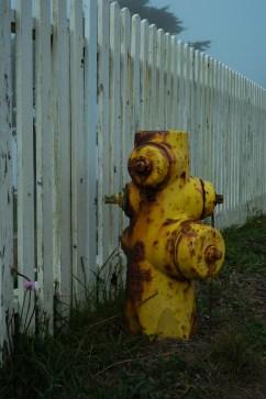 Fire Hydrant,Pt. Reyes