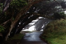 Pacifica mist, Pt. Reyes