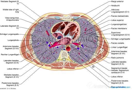 Cross Sectional Anatomy Abdomen Module
