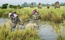 Elephants Riding At Kaziranga National Park