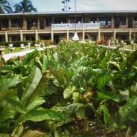 """Surigao Del Sur: Cantilan- """"The Cradle of Towns"""""""