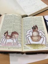 Spider combining Cassie and Dervla's work