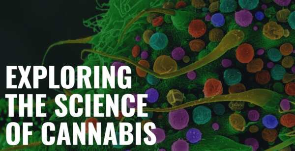 exploring the science of cannabis