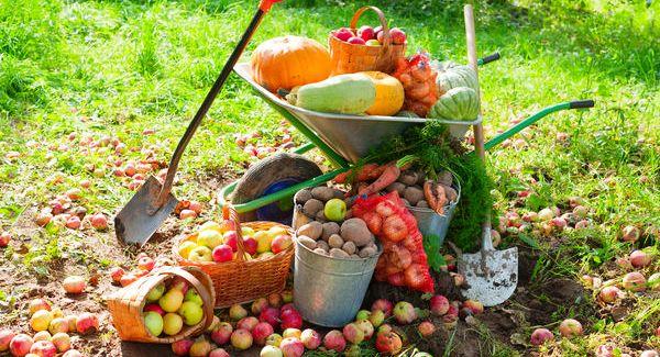 Как подготовить свой сад к зимним холодам