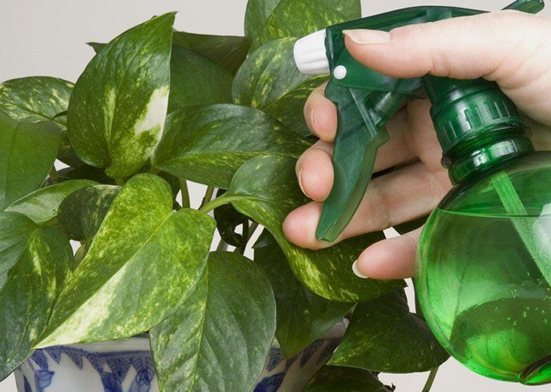 Как разводить зеленое мыло для комнатных растений