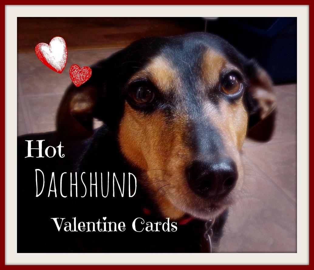 happy valentine day dachshund